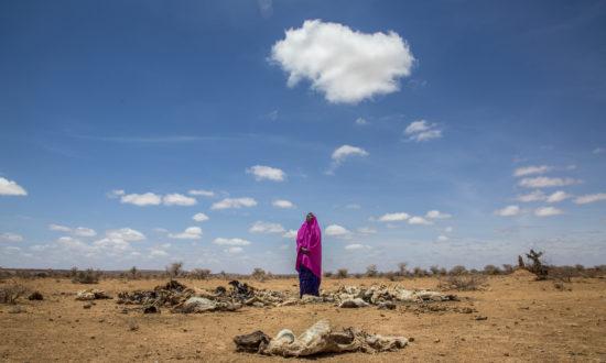 Amina Suleiman Gas, Somaliland